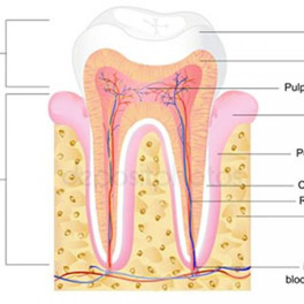 Root Canal Treatment Newport Beach - Root Canal Treatment Orange County